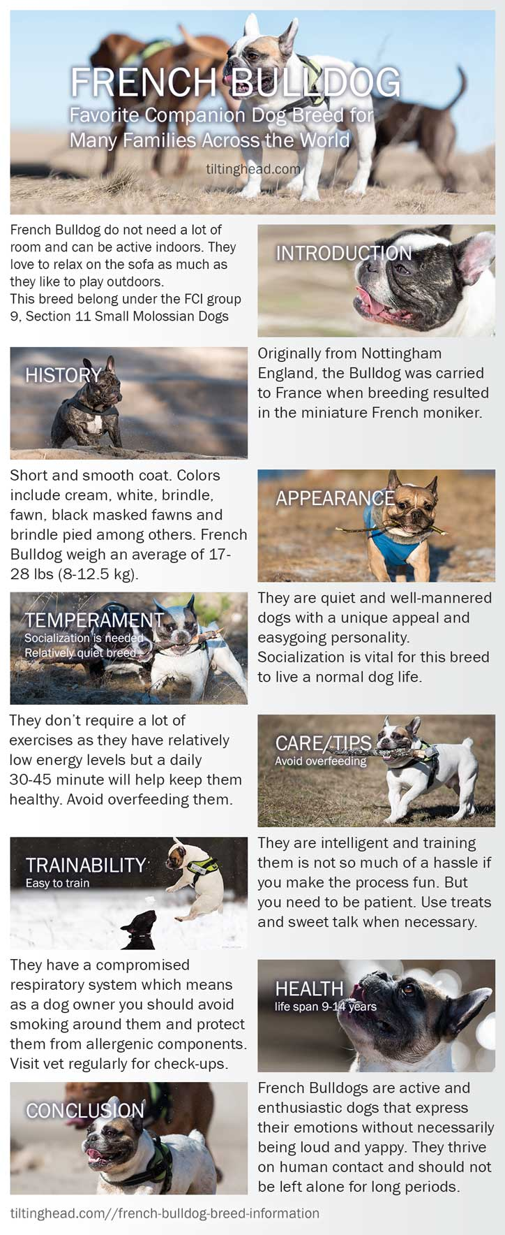 french bulldog breed Infographic
