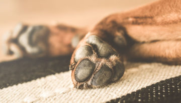 dog's nails