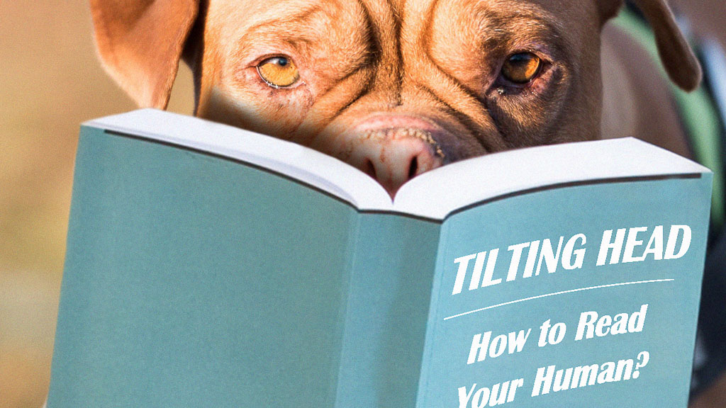 dog reading book about how to read human