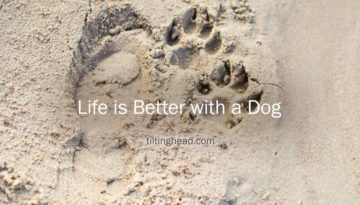 life-is-better-with-a-dog