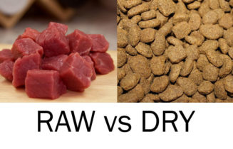 raw food vs dry dog food