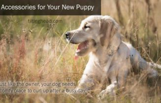 young labrador retriever lying in grass on the picture is text 5 accessories for your new puppy