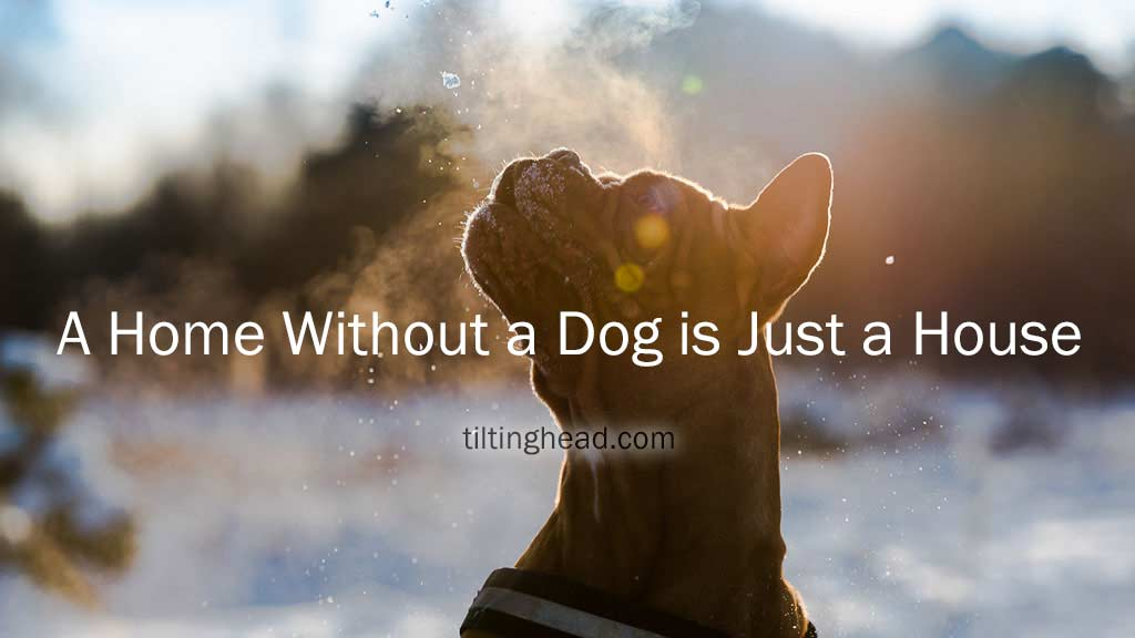 dogs profile middle of the picture with text a home without a dog is just a house
