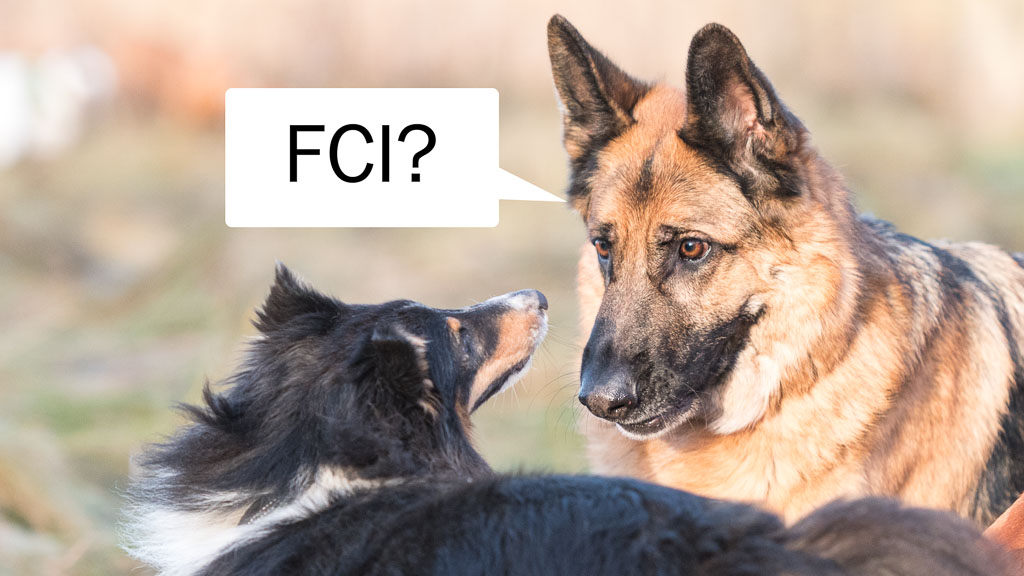 two dogs and text fci