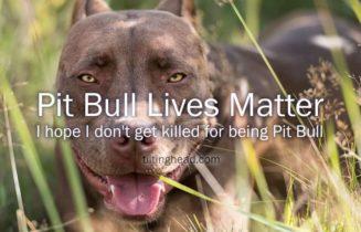 pit-bull-lives-matter