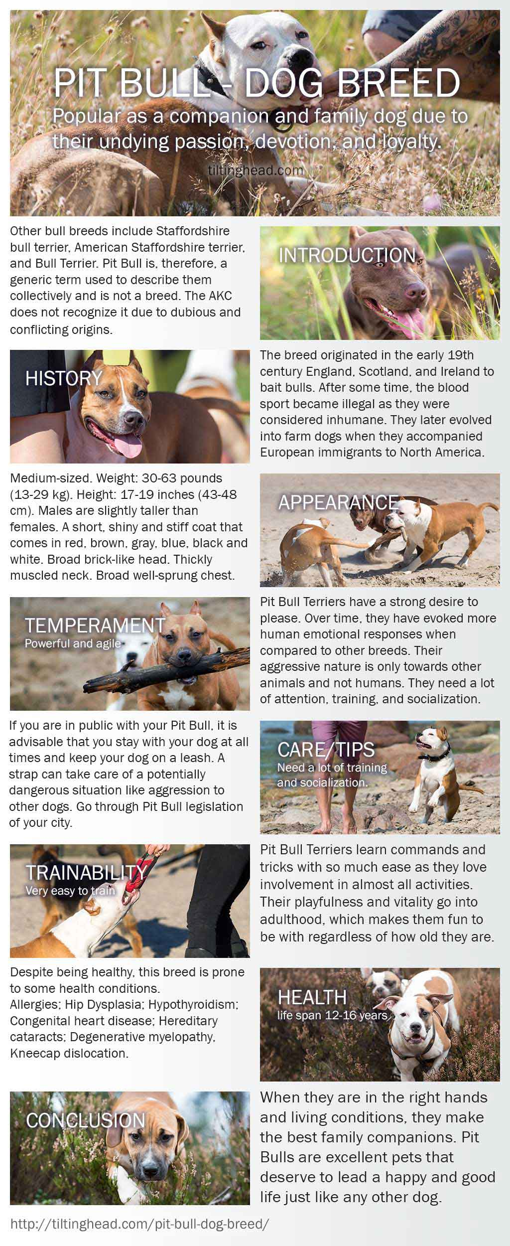pit bull infograph