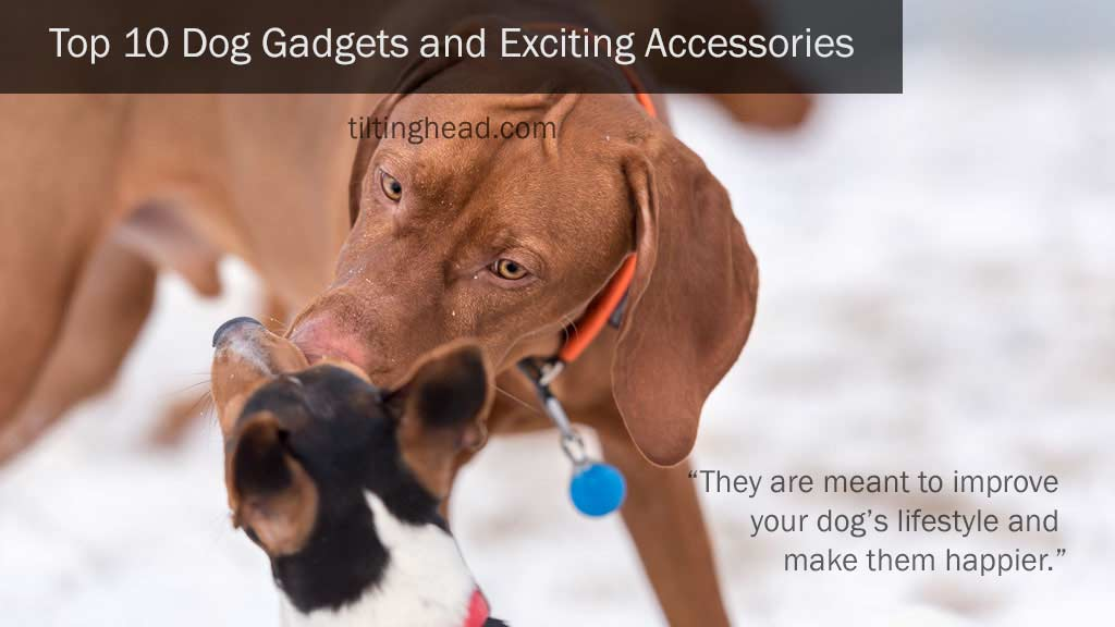 top-10-dog-gadgets-and-exciting-accessories