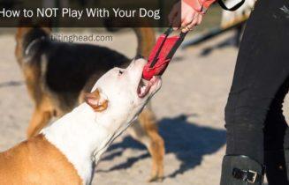 playing tug-of-war with dog
