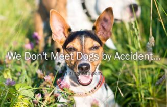 we don`t meet dogs by accident