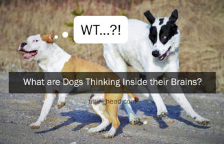 what-are-dogs-thinking-inside-their-brains-28934