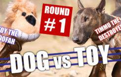 dog vs toy